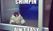 chimpin aint easy ikea monkey animal window coat jacket funny pics pictures pic picture image photo images photos lol