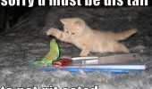 cat kitten animal bird budgie must be this tall not eaten funny pics pictures pic picture image photo images photos lol