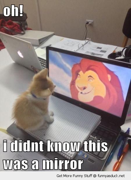 cute cat kitten laptop lion king mufasa didn't know mirror animal funny pics pictures pic picture image photo images photos lol
