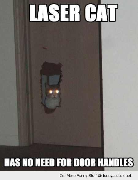 laser cat animal hole door no need for handles lolcat funny pics pictures pic picture image photo images photos lol