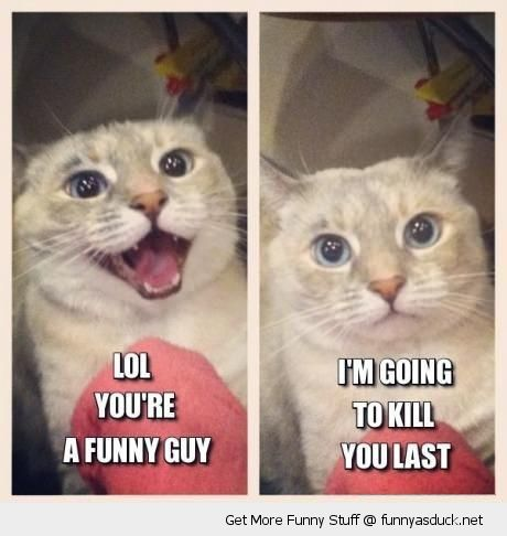 laughing cat lolcat animal you're funny guy angry grumpy kill you last funny pics pictures pic picture image photo images photos lol