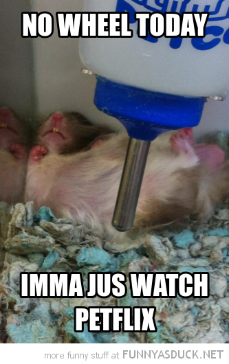 lazy hamster sleeping no wheel today watch petflix animal funny pics pictures pic picture image photo images photos lol