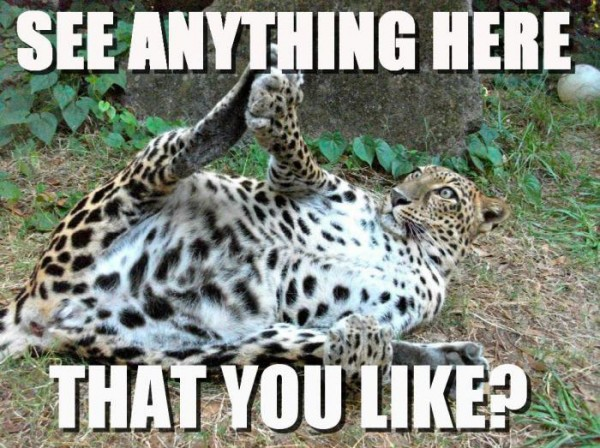 see anything you like flashing rude pervert leopard big cat animal funny pics pictures pic picture image photo images photos lol