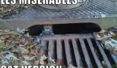 cat stuck down storm drain animal lolcat les miserables cat edition funny pics pictures pic picture image photo images photos lol