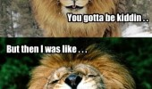 first was like then gotta be kidden lion animal laughing funny pics pictures pic picture image photo images photos lol
