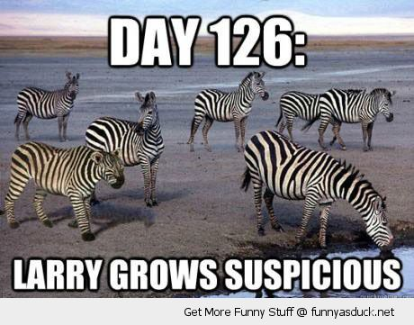 undercover lioness animal dressed zebra disguise larry grows suspicious funny pics pictures pic picture image photo images photos lol