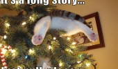 cat lolcat animal stuck xmas christmas tree long story just pull funny pics pictures pic picture image photo images photos lol