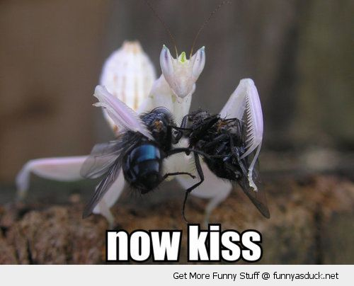 now kiss insects animals praying mantas flies holding funny pics pictures pic picture image photo images photos lol