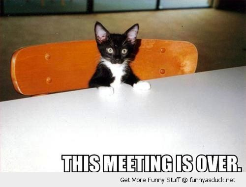 this meeting is over cat kitten cute tavle angry grumpy animal funny pics pictures pic picture image photo images photos lol