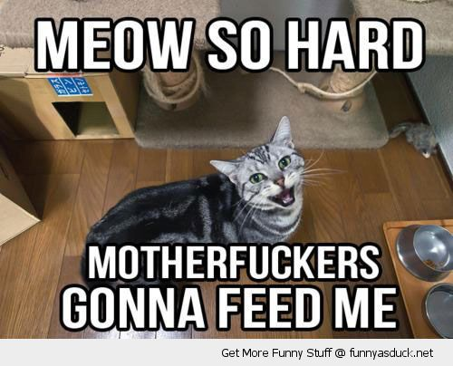 cat lolcat wanting fed meow so har motherfuckers gonna feed me funny pics pictures pic picture image photo images photos lol