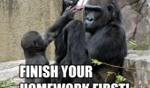 monkeys chimps animals nintendo ds video game homework first mom dad kid funny pics pictures pic picture image photo images photos lol