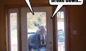 never trust moose animal at door use phone car broke down dog  funny pics pictures pic picture image photo images photos lol