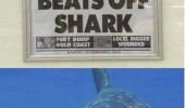 news paper report woman beats off shark happy smiling animal ocean funny pics pictures pic picture image photo images photos lol