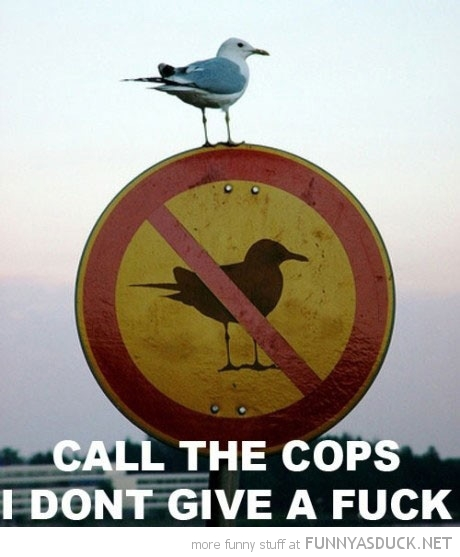 seagull bird sitting sign animal call cops don't give fuck funny pics pictures pic picture image photo images photos lol