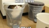 cat lolcat animal bin garbage trash bathroom toilet now i wait funny pics pictures pic picture image photo images photos lol
