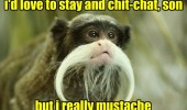 old man monkey animal love to stay chat really mustache  funny pics pictures pic picture image photo images photos lol