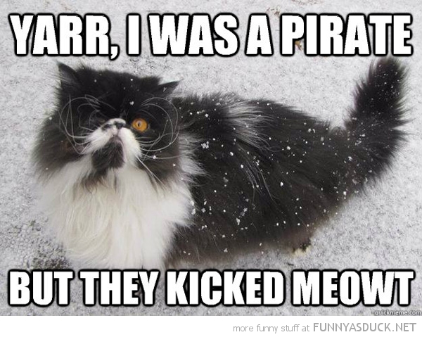 funny-one-eyed-pirate-cat-kicked-meowt-p