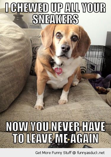 overly attached dog animal chewed sneakers never leave me again funny pics pictures pic picture image photo images photos lol
