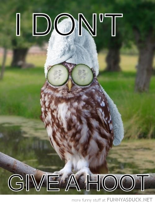 owl bird animal towel head cucumber eyes dont give hoot funny pics pictures pic picture image photo images photos lol
