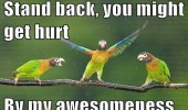 parrots birds tree branch dancing stand back hurt awsomeness  funny pics pictures pic picture image photo images photos lol