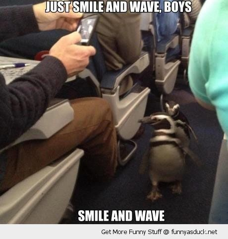 penguins animals birds walking plane train isle smile and wave boys funny pics pictures pic picture image photo images photos lol