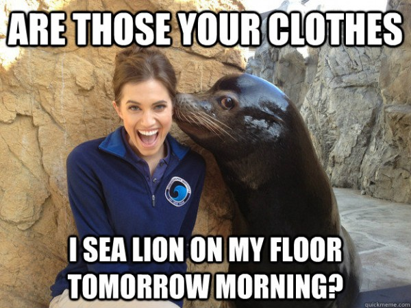pervert sexy seal woman girl laughing are they your clothes sea lion on my floor tomorrow joke pun animal funny pics pictures pic picture image photo images photos lol