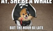 dog animal dressed up pirate costume she be whale hour late blowhole wet funny pics pictures pic picture image photo images photos lol