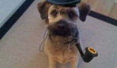posh like sir dog animal top hat i say devil old bean pipe funny pics pictures pic picture image photo images photos lol