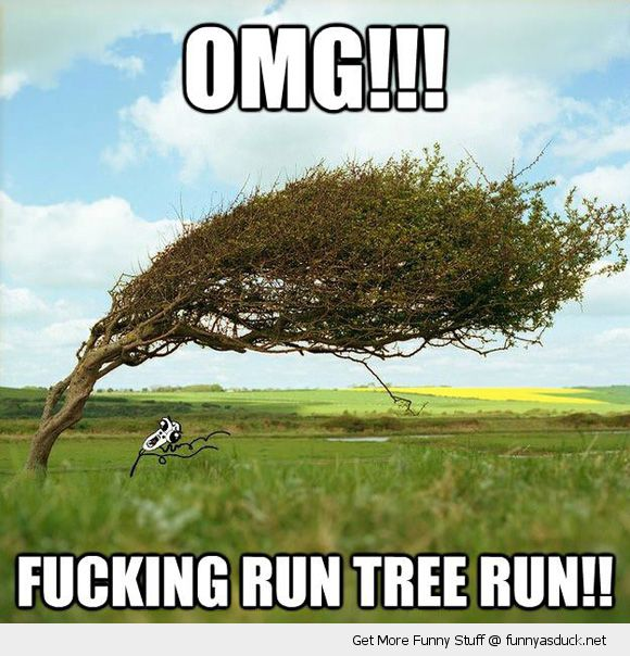 omg running man meme rage comics fucking run tree bent wind funny pics pictures pic picture image photo images photos lol