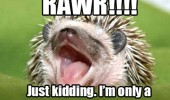 rawr cute baby hedgehog just kidding animal funny pics pictures pic picture image photo images photos lol