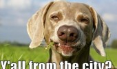 redneck dog animal chewing grass field ya'll from city funny pics pictures pic picture image photo images photos lol