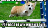 ridiculously photogenic dog corgi jumping fence winking animal solid opportunity win internet from cats funny pics pictures pic picture image photo images photos lol