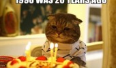 sad depressed cat lolcat animal birthday cake party candles 1990 was 20 years ago funny pics pictures pic picture image photo images photos lol