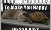 sad cat lolcat animal happy turtle here on bad days funny pics pictures pic picture image photo images photos lol