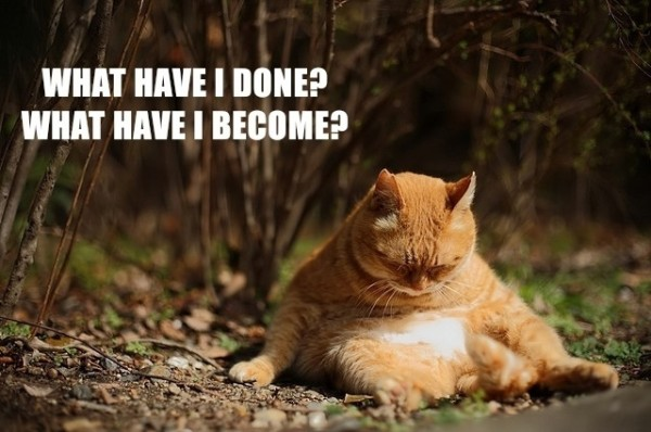 fat cat animal sad depressed lolcat what have i done become sitting funny pics pictures pic picture image photo images photos lol