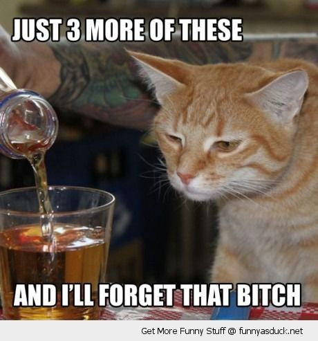 sad depressed cat lolcat animal drinking drunk scotch 3 more forget that bitch funny pics pictures pic picture image photo images photos lol