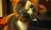 sad disappointed cat kitten lolcat animal rudolph costume what mean santa xmas christmas enough reindeer cute funny pics pictures pic picture image photo images photos lol