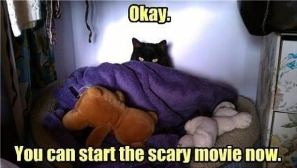 cute cat hiding blanket bed animal lolcat okay start scary movie now funny pics pictures pic picture image photo images photos lol