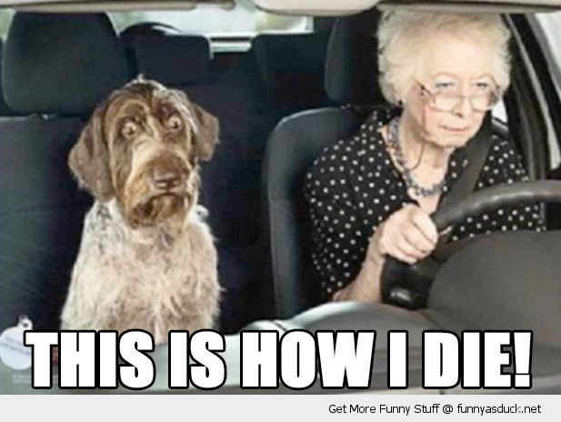 Scared Shocked Dog Animal Old Lady Senior Citizen Driving Car This Is
