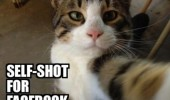cat lolcat animal self shot facebook funny pics pictures pic picture image photo images photos lol