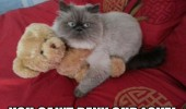 cat lolcat animal angry grumpy cuddling hugging teddy bear toy can't deny love funny pics pictures pic picture image photo images photos lol