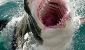 shark attack animal bite hug with mouth sea ocean funny pics pictures pic picture image photo images photos lol