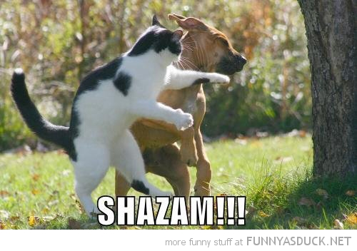 shazam cat lolcat animal punching dog face funny pics pictures pic picture image photo images photos lol