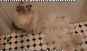 cat lolcat animal shed fur didn't touch him exploded animal funny pics pictures pic picture image photo images photos lol