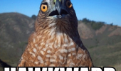 shocked surprised bird animal pun joke hawkward awkward funny pics pictures pic picture image photo images photos lol