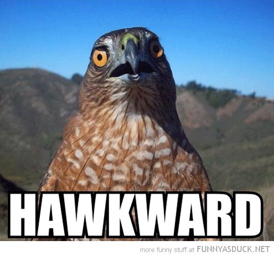 shocked surprised bird animal pun joke hawkward awkward funny pics pictures pic picture image photo images photos lol