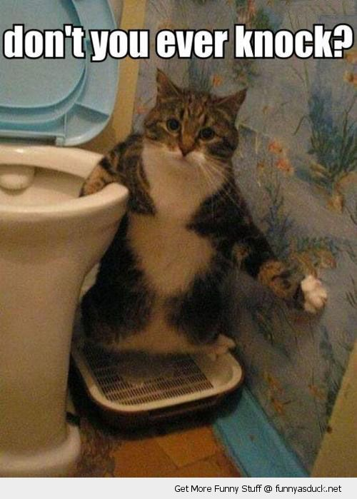 cat animal lolcat bathroon toilet shocked surprised do you ever knock funny pics pictures pic picture image photo images photos lol