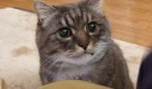 shocked surprised cat lolcat animal i'm getting fixed am i broken funny pics pictures pic picture image photo images photos lol