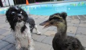 shocked surprised scared fright dog animal duck wtf is that funny pics pictures pic picture image photo images photos lol