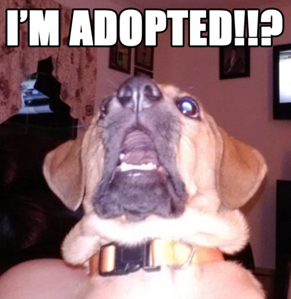 i'm adopted shocked surprised dog animal sad funny pics pictures pic picture image photo images photos lol